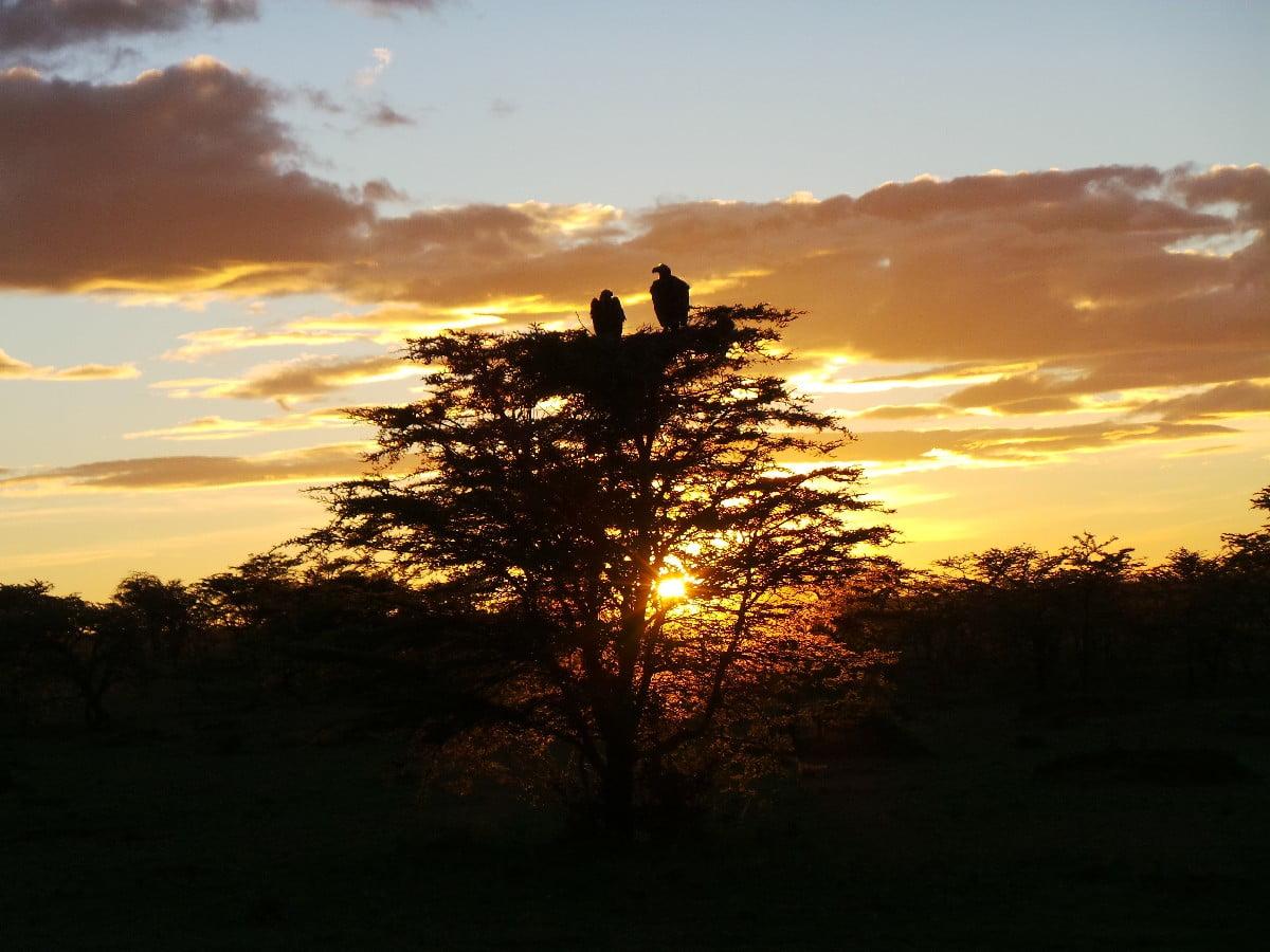 Masai Mara gündoğumu